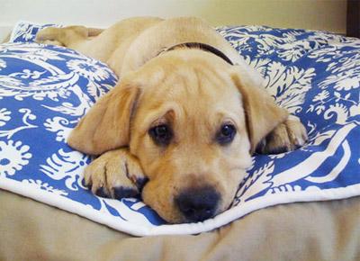 /static/images/articles/Blue Blood Living dog bed