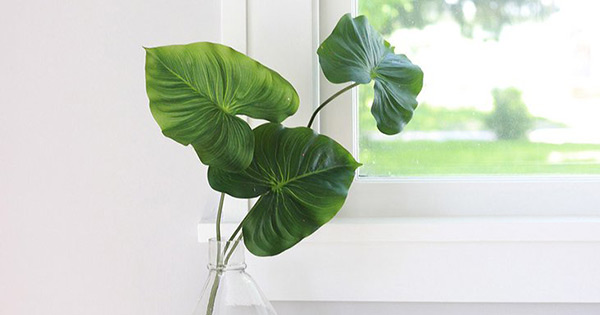 Indoor Plant tips guaranteed to help keep them alive (maybe). - cover
