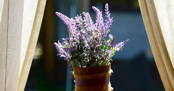 Feeling Frazzled? *This* Herb Can Lower Your Pulse Rate