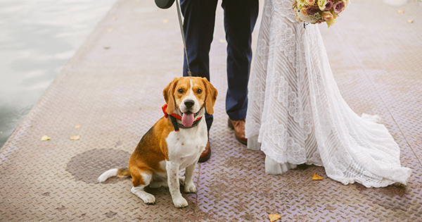 These Custom Etsy Doggie Gowns Mean You Can Finally Dress Your Pup Like the '80s Bridesmaid She Is