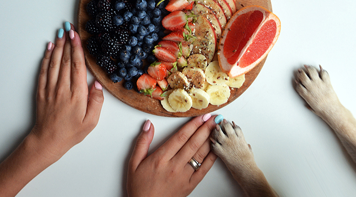 We Asked a Vet: Can Dogs Eat Blueberries?