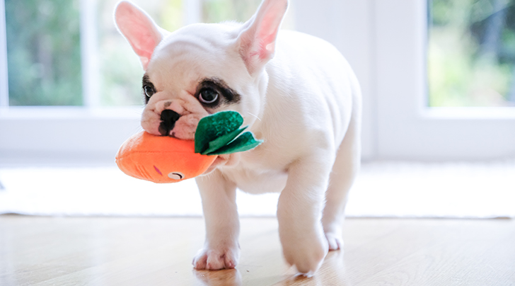 Fido Wants to Know: Can Dogs Eat Carrots?