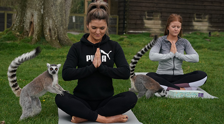 Move Over, Goat Yoga: You Can Now Stretch With a Pack of Lemurs