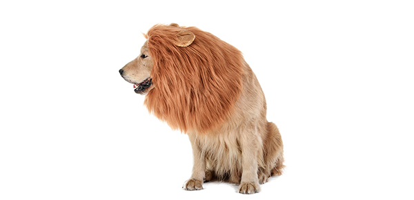 This Lion Mane Is Amazon's #1 Selling Dog Costume and It's Weirdly Realistic
