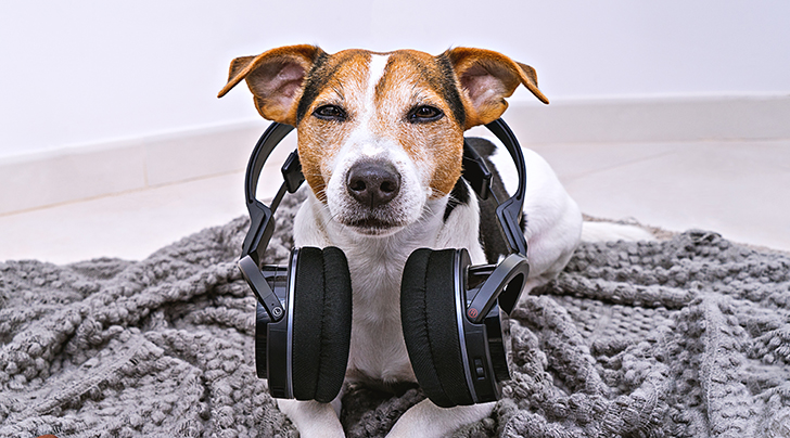 Spotify Just Created a Playlist & Podcast for Dogs to Listen to While We're at Work