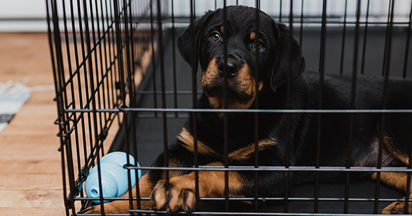 Crate Training a Puppy: Absolutely Everything You Need to Know (and Need)