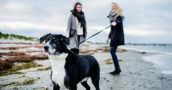 How to Stop Leash Aggression According to Experts and Real Dog Owners