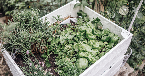 What Herbs Grow Well Together? We Asked an Expert